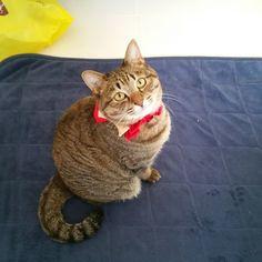 「おはにゃーん❗good morning❗  #ねこ #猫 #猫写真 #ネコ #しましま軍団 #きじとら #きじねこ #キジトラ #キジネコ #cat #catstagram #igclubcats #ilovemycat #instacat #neko #tabby #kitty #meow…」