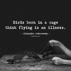 56 Ideas caged bird quotes truths for 2019 Poetry Quotes, Wisdom Quotes, True Quotes, Great Quotes, Quotes To Live By, Motivational Quotes, Inspirational Quotes, Love Quotations, Happiness Quotes