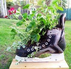 Love this idea for an old pair of hockey skates. Any Wranglers fans already have something like this in your yards? Outdoor Planters, Garden Planters, Hockey Mom, Hockey Stuff, Garden Boxes, Garden Ideas, Stuff To Do, Craft Projects, Backyard