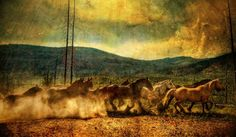 #Horses of #Yellowstone. photo from #treyratcliff at www.StuckInCustom... - all images Creative Commons Noncommercial