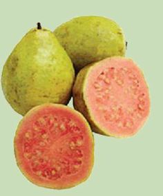 Guayaba [ Guava ] con las que se hace el dulce, tan conocido en Brasil