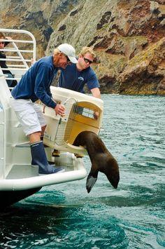 Marine Conservation, Wildlife Conservation, Work With Animals, Cute Animals, Marinha Wallpaper, My Future Job, Wildlife Biologist, Marine Biology, Dream Job