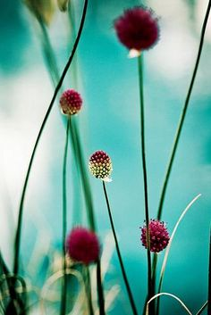 aubergine, grass green, turquoise sky