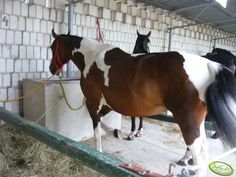 #koń #zwierzeta #hors #agriculture #animals