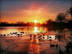 goose hunting | Waterfowl haven | Duck hunting