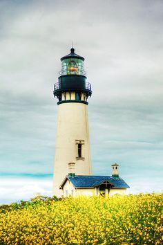 https://flic.kr/p/8txJR8 | Yaquina Head - Oregon