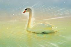 Zwaan       Swan