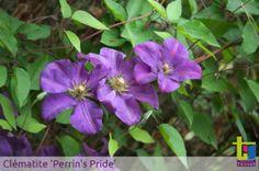 Visite de l'arboretum des près des Culand de Meung sur Loire ou vous pouvez y découvrir nitre collection. Plus d'infos sur www.clematite.net