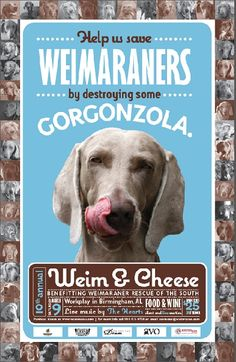 Weimaraner Rescue of the South, Adopting Weims to Loving Homes - I love Weims.  They are beautiful creatures with hearts of gold.  Adopt a rescue if you can!