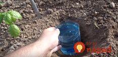 Kto pozná tieto triky, tento poriadne ušetrí na zavlažovaní aj postrekoch: Geniálne vychytávky, ktoré nestoja nič! Diy Artwork, Permaculture, Drink Bottles, Gardening Tips, Tricks, Plants, Vegetable Garden, Couple, Autos