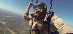 VIDEO: Skydiver Takes His Dog Along for the Ride, Says He Loves It