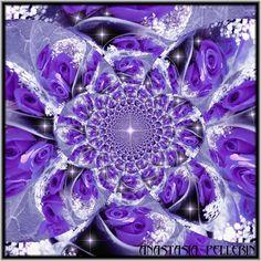 purplerosestar