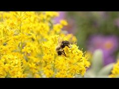 Neonicotinoids: The New DDT? - YouTube