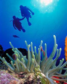 El #CaribeMexicano es uno de los mejores sitios en el mundo para la práctica de #buceo y #snorkel, por la transparencia de sus aguas, y las maravillosas expresiones de vida que allí abajo se desenvuelven.