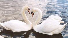 Nádherná rodičovská láska zvierat ♥
