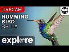 Hummingbird Fountain Camera - live video of hummingbirds | Explore.org