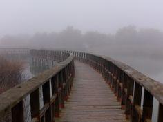 Dia de niebla en el PARQUE NACIONAL DE LAS TABLAS DE DAIMIEL - Ciudad. Real -España