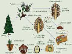 A maior parte das espécies possui reprodução sexuada, porém, algumas podem se reproduzir assexuadamente através de brotamento. O sistema de transporte de seiva possibilita sustentação à planta; Possuem a capacidade de se desenvolverem sobre o tronco de árvores; Possuem caule, chamado de rizoma, muito parecido com uma raiz