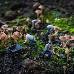 Mushroom Farmers