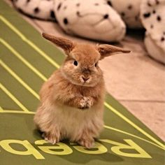 Bunny with a plan!