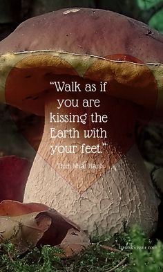 Walk lightly with sincere gratitude in your heart, mind and body. Be so grateful your heart sings as you walk the earth