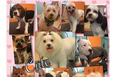 #CutetotheBone offers Pet Grooming services in Houston TX. We offer #DogGrooming #DogNailTrim #PuppyBath and more with the highest level of quality. Be sure to follow us to learn more about our company in the coming weeks.  #PetGrooming #PuppyBath #DogNailTrim #Houston #Houston77084 https://ift.tt/2GQYj6w
