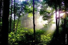 I want to visit the sacred grove