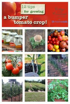cottageatthecrossroads-tomato growing tips