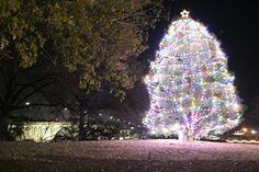 Lighted Christmas tree overlooking the Broad Street Bridge in Gadsden.