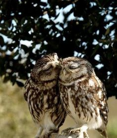 owls kiss with their eyes closed