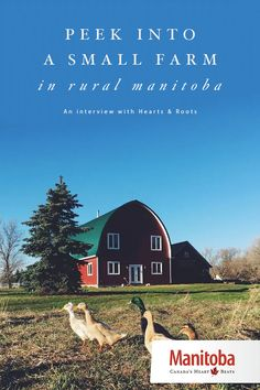 Hearts and Roots caught our attention early this year. Take a peek into their quaint farm in rural Manitoba… www.manitobahot.com #exploremb