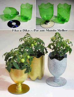 Utilizando garrafa pet com plantas
