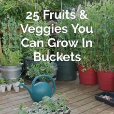 Not only is bucket gardening a great solution for people with limited space, it has many advantages over traditional gardening. Not only is bucket gardening a great solution for people with limited space, it has many advantages over traditional gardening. Backyard Vegetable Gardens, Vegetable Garden Design, Garden Landscaping, Landscaping Ideas, Veg Garden, Potted Garden, Garden Plants, Rooftop Garden, Balcony Garden