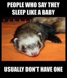 #ferrets #cute #animals #ferret #funny #forever #awesome #home #love #carpetshark #catsnake #weasel  https://www.facebook.com/YourEverydayFerretFerretsDook