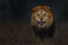 5.  животные, кадр, фото