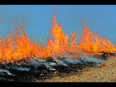 Anderson Creek #Wildfire  Impact on #Livestock
