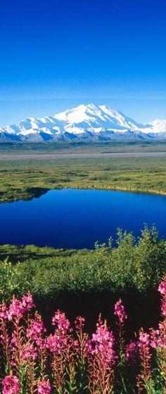 Denali National Park & Preserve, Alaska, USA - one day when it feels totally safe. to enjoy.