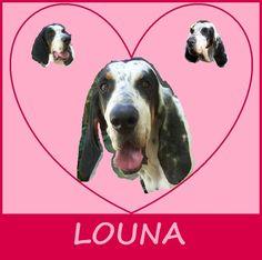Recherchons une famille aimante pour Louna :  https://refugecaninlotois.wordpress.com/2014/06/09/la-belle-louna-croisee-ariegeoise/