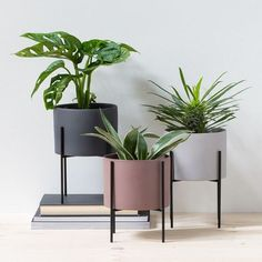 Adding green plants is a simple and easy way to bring life to your home decorating, in Anna's view. Flowerpots, available in three colours and one size: cm. Price per item Price DKK / EUR / ISK 1484 / NOK / GBP / SEK / CHF / FO-DKK Decoration Restaurant, Decoration Table, Planet Decor, Plantas Indoor, Metal Plant Stand, House Plants Decor, Style Deco, Modern Planters, Interior Plants