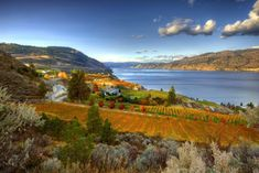 Million Dollar View. The best view in Summerland, BC. Part of Okanagan Crush Pads Fall 2019 Top Picks List. Grape Picking, How To Roast Hazelnuts, Growing Flowers, Go Outside, Nice View, Fresh Fruit, Crushes, Scenery, Paisajes