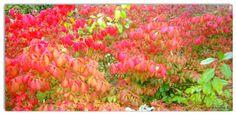 Autumn in red ~ Annet ©