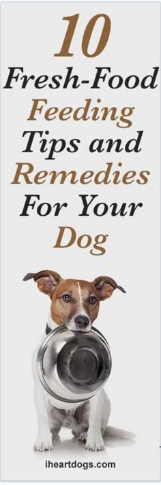 10 Fresh-Food Feeding Tips And Remedies For Your Dog
