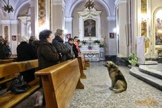 A heartbroken 7-year-old German Shepherd, whose Mom Maria Margherita Lochi died two months prior to the taping of this video, patiently waits for her in the church they attended daily.