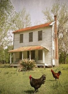 .love this farmhouse and the chickens