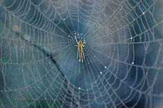 Charlottes Web, Itsy Bitsy Spider, Spider Web, Blue, Nature Inspired Home and Office Wall Art Kids Room Wall Art, Office Wall Art, Spider Spider, Itsy Bitsy Spider, Charlottes Web, Stunning Photography, Saturated Color, Nursery Neutral, Detailed Image