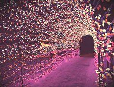 pink light tunnel christmas pink christmas lights christmas lights quotes christmas tree