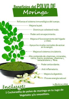 Hábitos Health Coaching | BENEFICIOS DEL POLVO MORINGA
