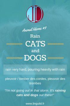 "Animal idiom: ""Rain cats ands dogs"" 🐱🐶  #EnAvantAnglais #EnglishIdioms #Idioms #Anglais #ApprendreAnglais LinguiLD /Idioms/ (Design by LinguiLD)"