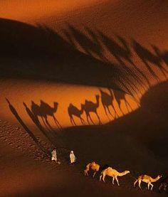 rarnon: Dromedary caravans near Nouakchott, Mauritania, Yann Arthus-Bertrand Aerial Photography, Love Photography, Inspiring Photography, National Geographic, Arthus Bertrand, French Photographers, Landscape Photographers, Silhouette, Light And Shadow