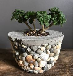 Votive candle holder made of concrete or succulent planter with shells from Bear Lake Idaho beach house style country house decor garden accessory - Concrete or succulent votive candle holder with pot - Diy Concrete Planters, Concrete Crafts, Concrete Projects, Small Succulents, Succulent Pots, Succulents Garden, Garden Pots, Votive Candle Holders, Votive Candles